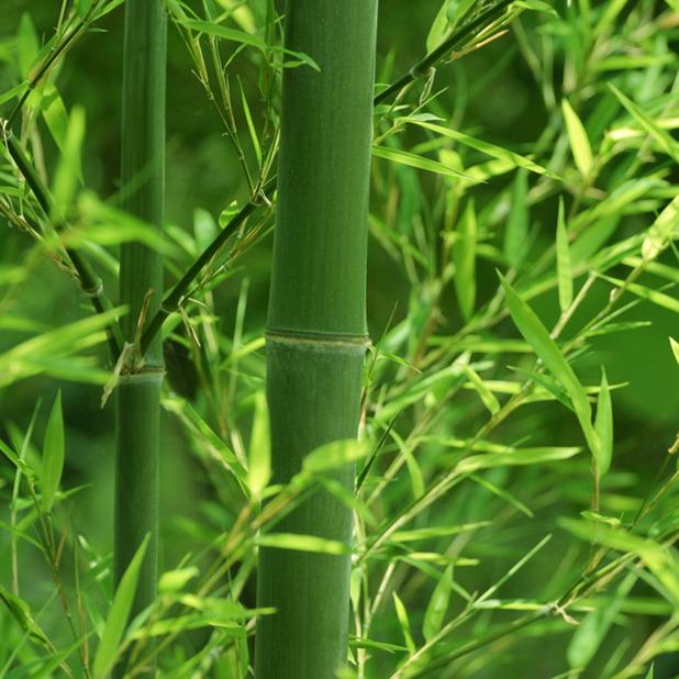 Bảo quản cây gỗ tre, nứa bằng phương pháp tẩm sấy